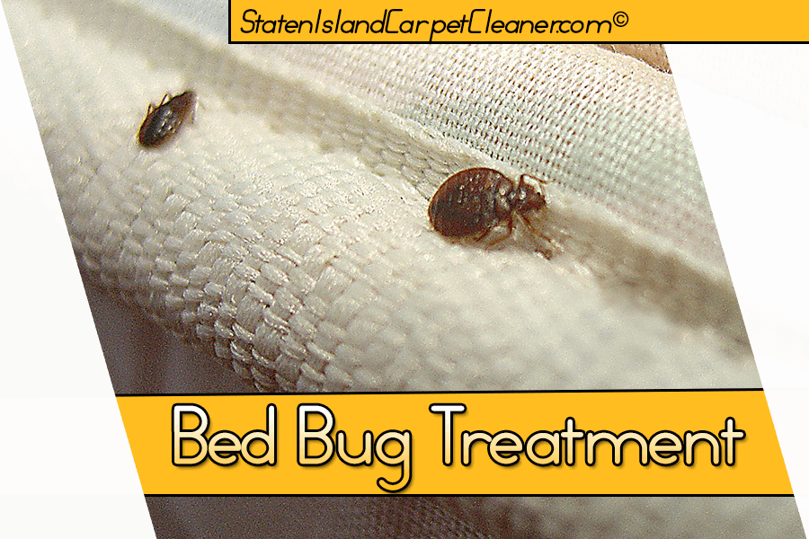 guaranteed bug bed service midwest removal services